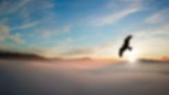 1 bird.jpg