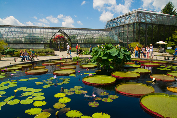 Longwood Gardens lily