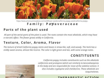 Get to Know: California Poppy