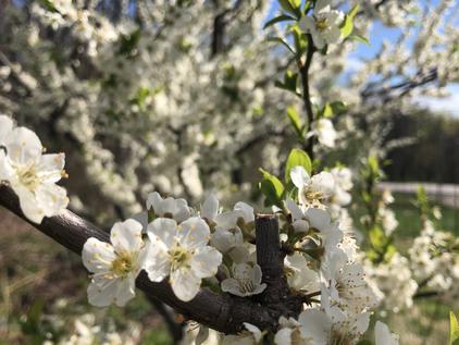 The Wisdom of Fruit Trees