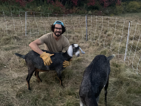 Beginner's Guide to Goat Ownership