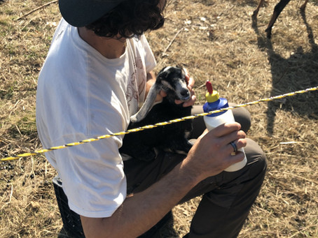 Goat Kidding & Raising Baby Goats