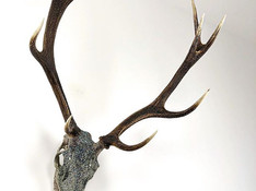 Stunning 10-point stag.