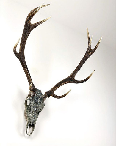 Beautifully Scottish - the 10-point stag.