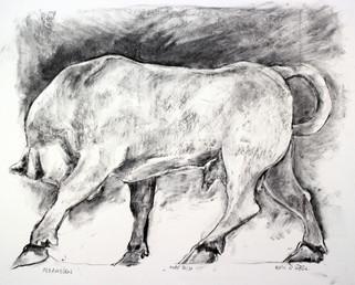 Kerameikos, the Bull