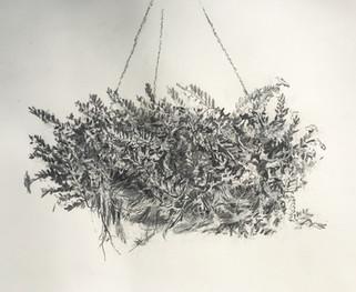 Hanging Basket #1