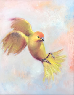Saffron Finch 9