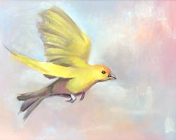 Saffron Finch 4