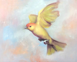 Saffron Finch 7