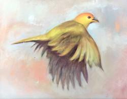 Saffron Finch 12