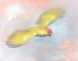 Saffron Finch 6