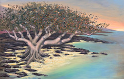 Ancient Banyan