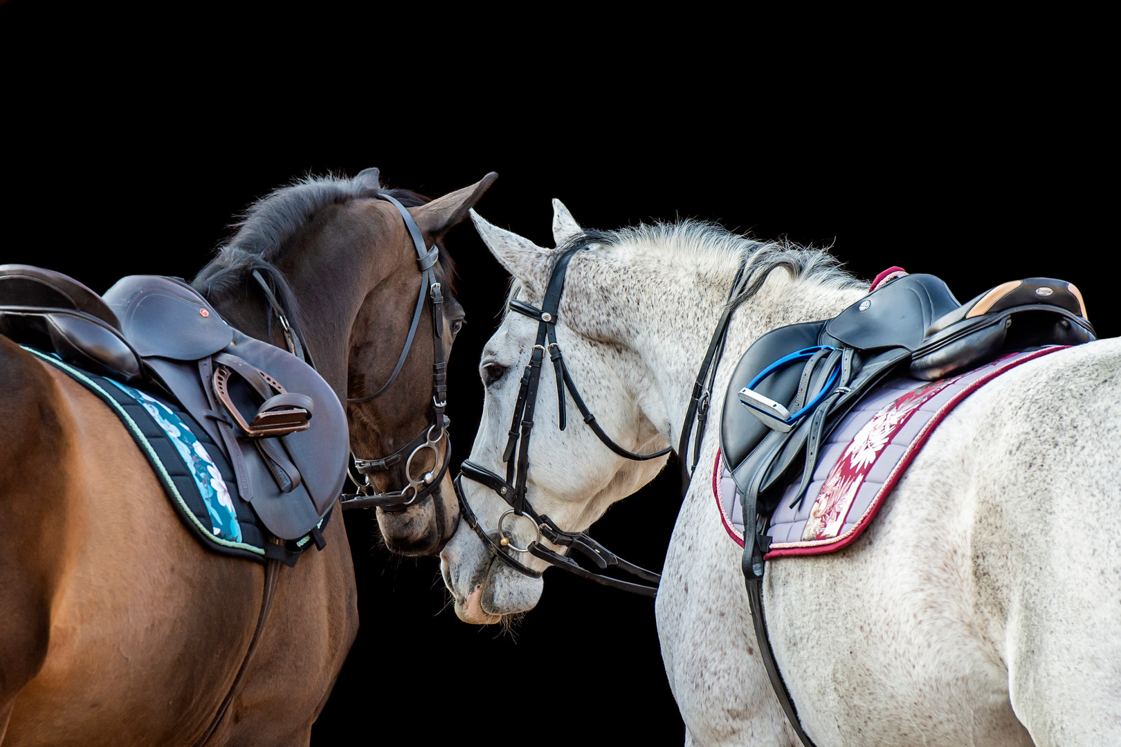 Onyx Equestrian