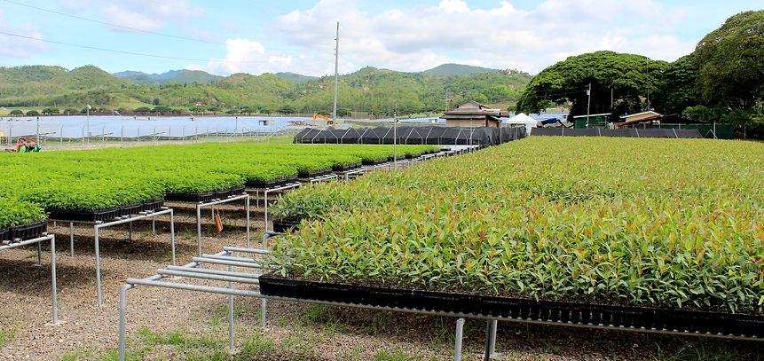 seedling nursery wp.JPG