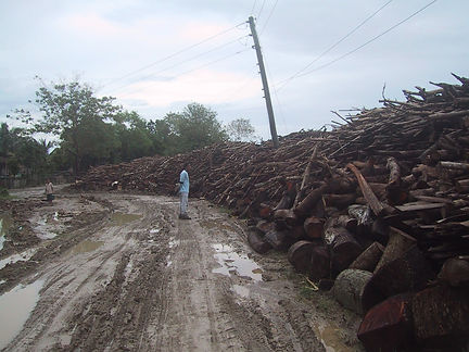 fuelwood 3.jpg