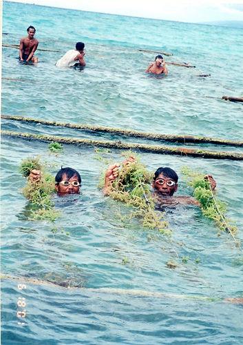 seaweed proj_1.jpg