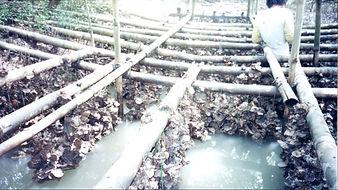 mariculture proj_1.JPG