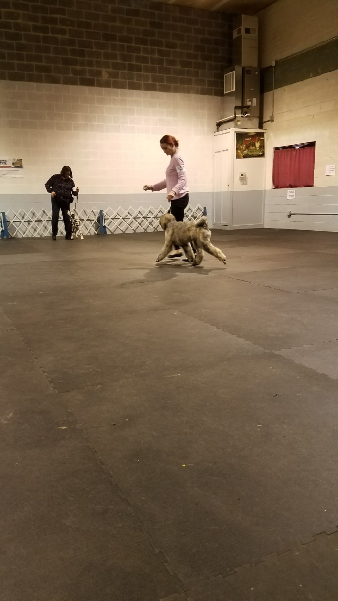 Audrey Lynn showing her dog Freya
