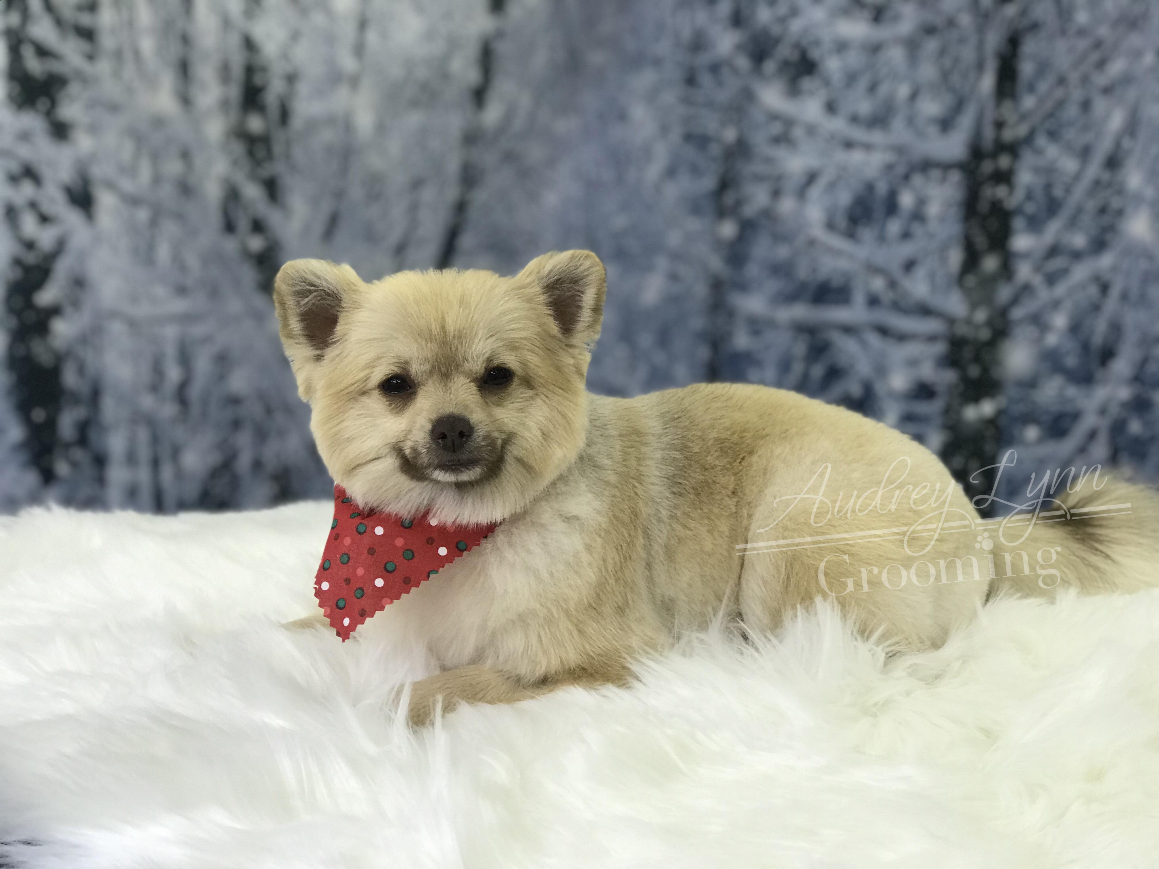 Pupper 18