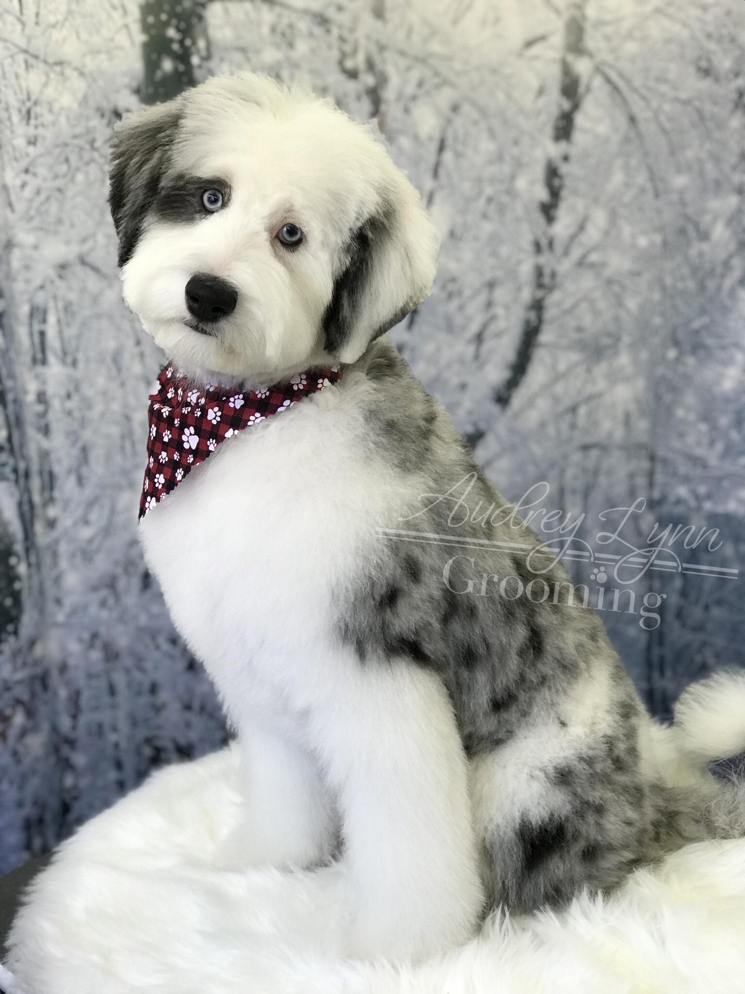 Pupper 31