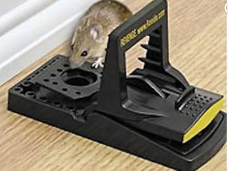 Responsible Approach to Rodent Control - a Homeowner's Guide
