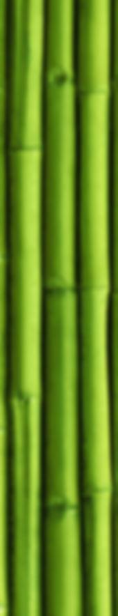 Bamboo_AdobeStock_165634055_edited_edite