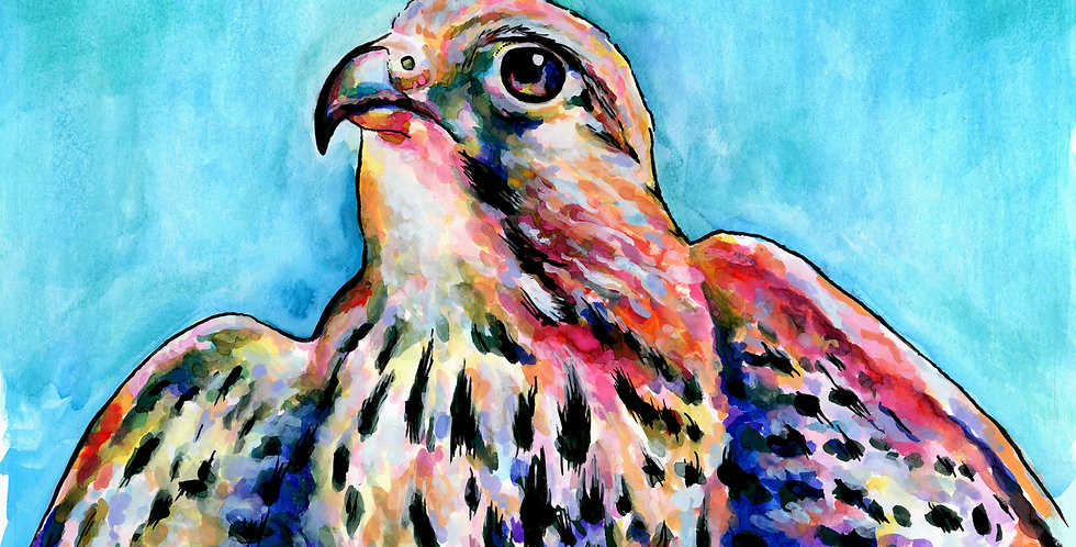 Falcon Watercolor Painting