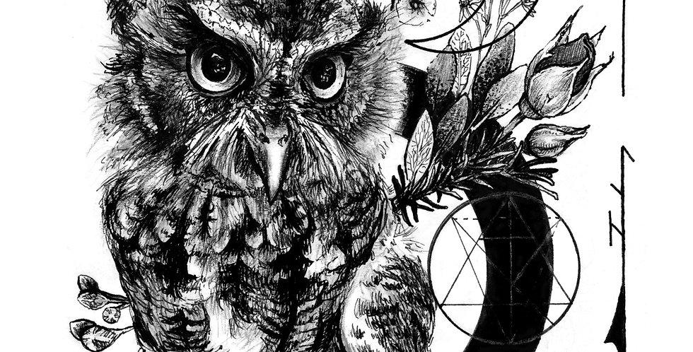 "Owl Drawing ""Seeking Knowledge"""