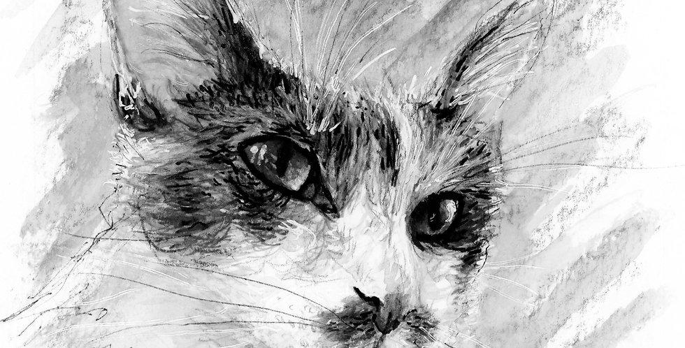 """Cato"" Water Soluble Graphite Cat Illustration"