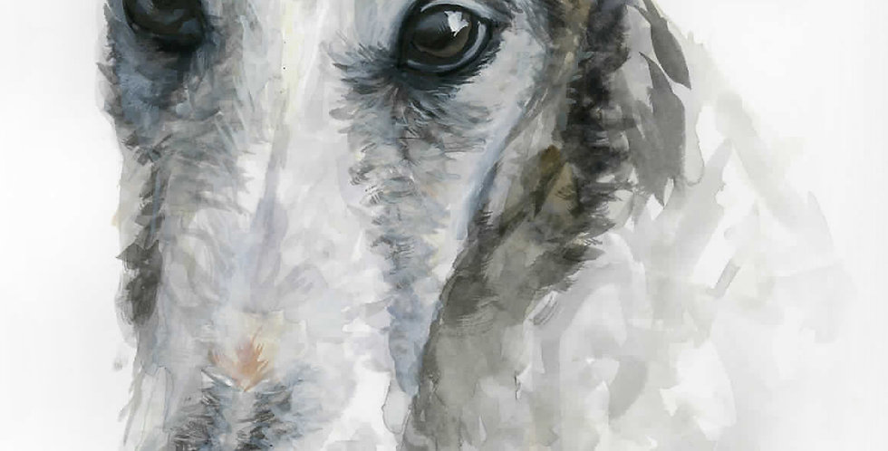 Whippet Watercolor