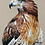 "Thumbnail: ""Newt"" Red Tailed Hawk Painting"