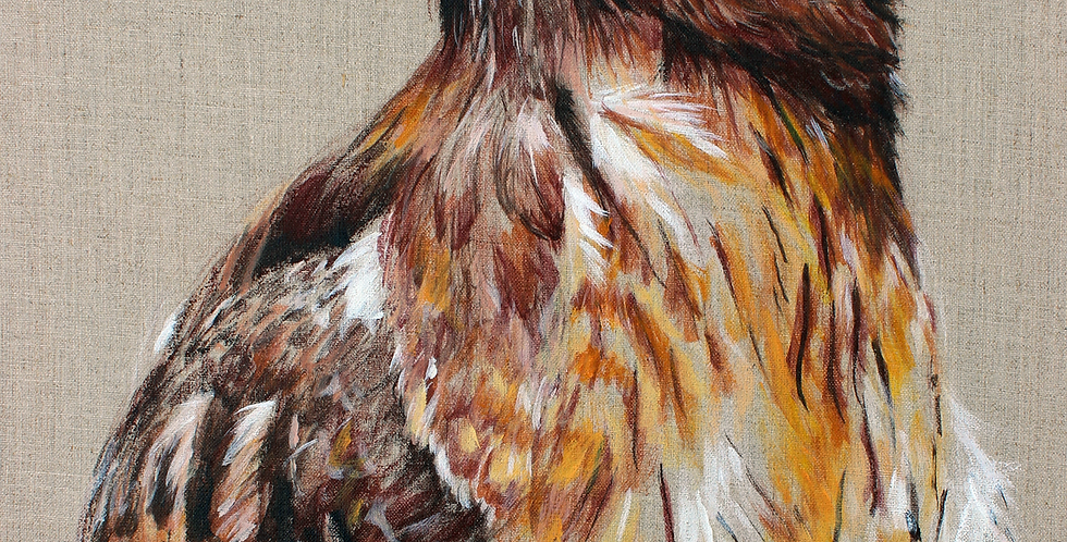 """Newt"" Red Tailed Hawk Painting"