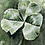 Thumbnail: Three Leaf Clover Watercolor, Ink, Pencil, and Gouache Painting