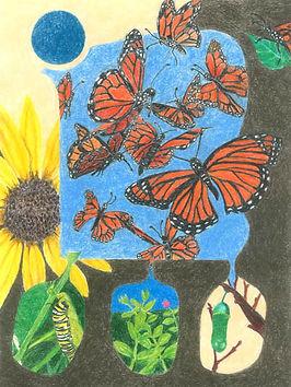 butterflies 2016 copy 2.jpg