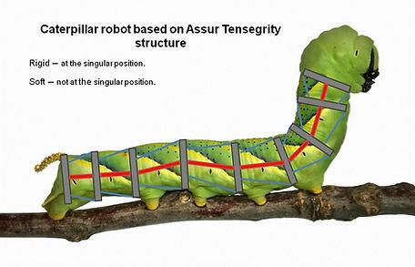 asme caterpillar.jpg