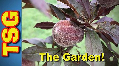 garden-for-website.jpg