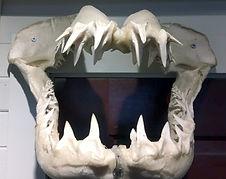PG Shell museum - image3.jpg