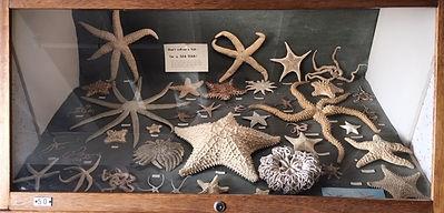 PG Shell museum - image8.jpg