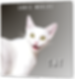 CAT Standardized Box.png