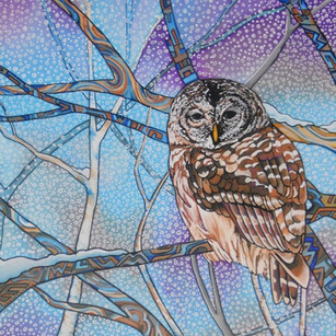 Barred Owl painting by Melissa Hood