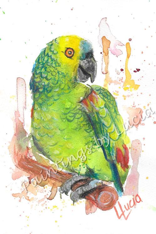 A5 Parrot Watercolour Original