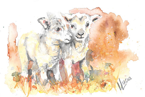 A4 Lambs Watercolour Original
