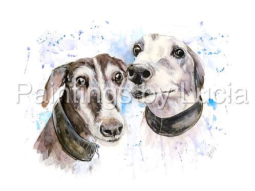 Greyhounds together