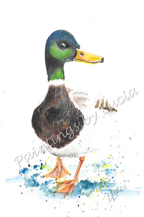 A4 Duck Watercolour Original