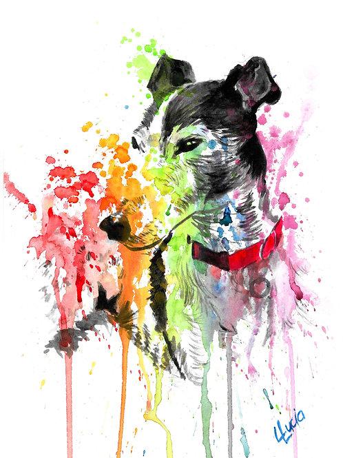 Greyhound Rainbow Blaze