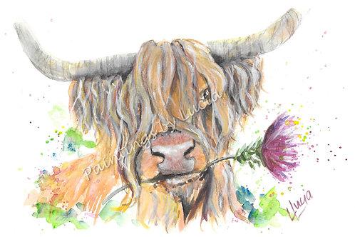 Highland Cow (head)