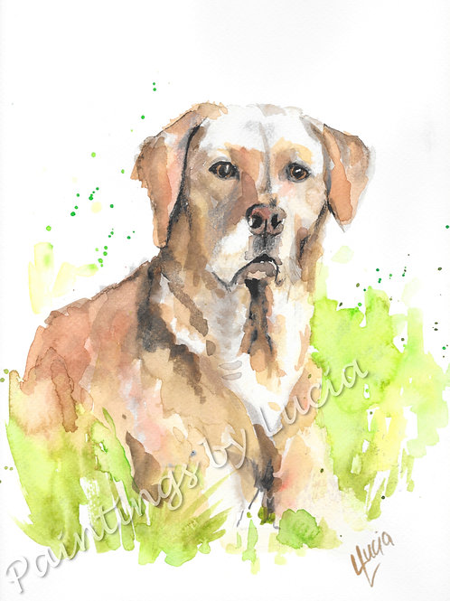 9x12 Cream Labrador Watercolour Original