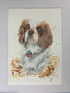 Watercolour dog