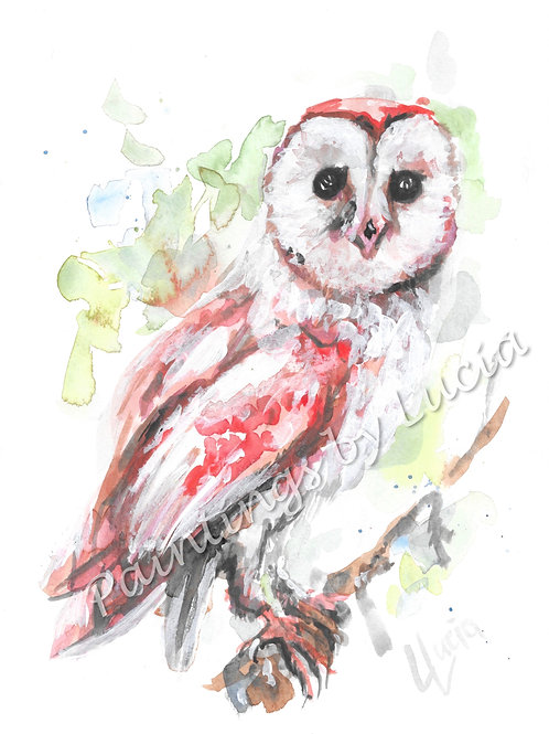 A4 Barn Owl Watercolour Original