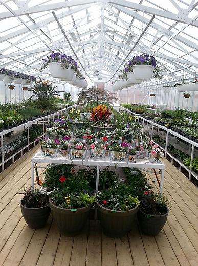 greenhouse_background.jpg